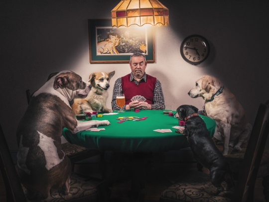 gratisography-man-dogs-playing-cards-thumbnail